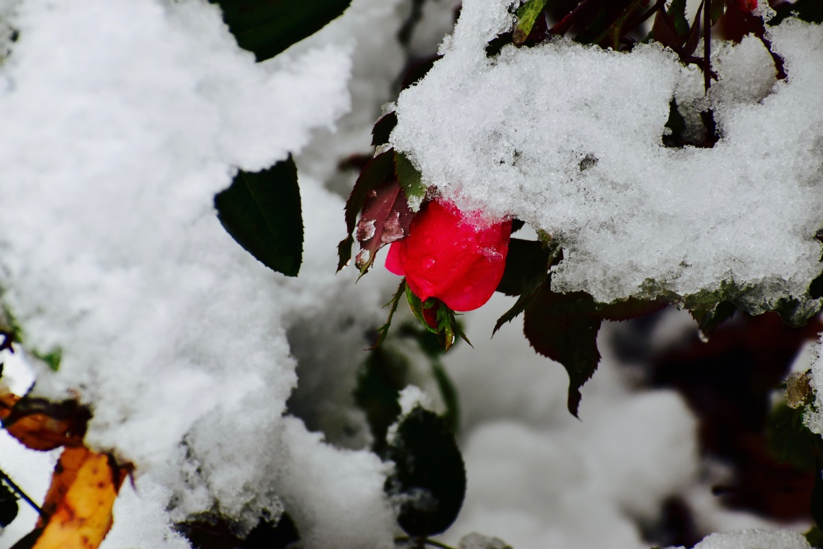 Grief and theHolidays