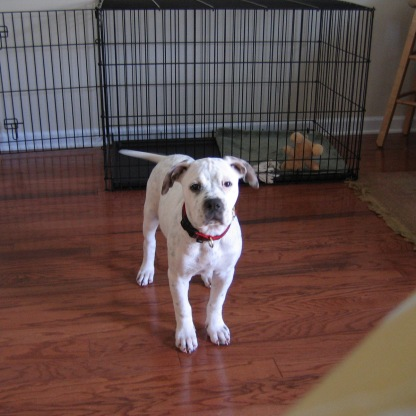 Allie Pup 2